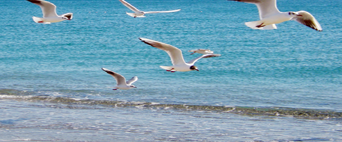 ocean-birds-back | Ocean Matters