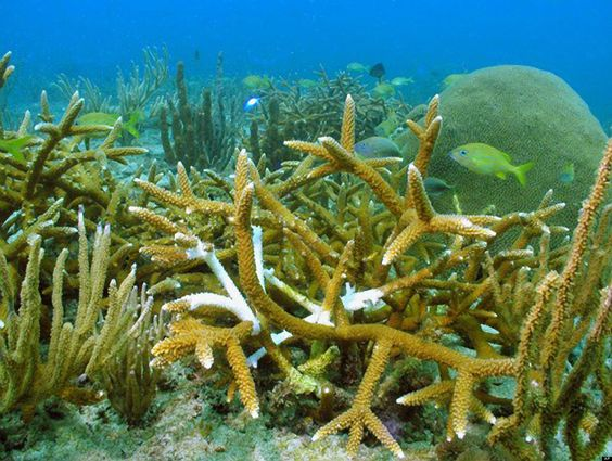 What Happens To The Coral Reef During A Hurricane Ocean